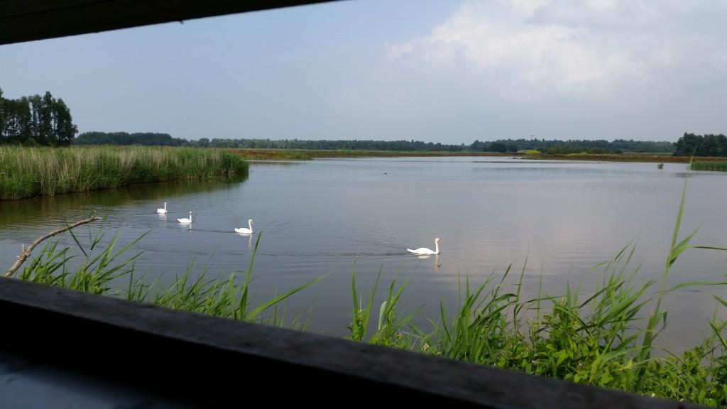 oostvaardersplassen vogelkijkhut uitstapjes flevoland